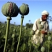 Afghan Heroin: The Lost War