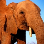 "Image for the Nature programme ""Elephant Diaries"""
