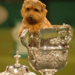 "Image for the Special Interest programme ""Crufts 2008"""