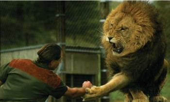 Lion Man Nature What Happens Next On Lion Man With