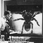 "Image for the Film programme ""Tarantula"""