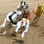 "Image for the Sport programme ""Live Greyhound Racing"""