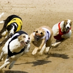 "Image for the Sport programme ""Greyhound Racing"""