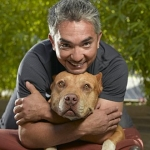 "Image for the Documentary programme ""The Dog Whisperer"""