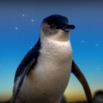 "Image for the Nature programme ""Penguin Island"""
