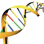 "Image for the Scientific Documentary programme ""The Gene Code"""