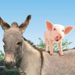 "Image for the Childrens programme ""Big Barn Farm"""