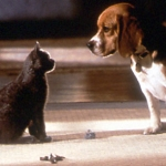 "Image for the Film programme ""Cats and Dogs"""