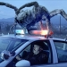 Image for Eight Legged Freaks
