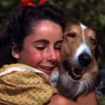 "Image for the Film programme ""Courage of Lassie"""