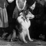 "Image for the Film programme ""Challenge to Lassie"""