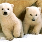"Image for the Nature programme ""Snow Babies"""