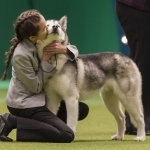 "Image for the Special Interest programme ""Crufts 2013"""