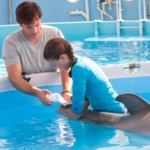 "Image for the Film programme ""Dolphin Tale"""