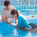 Image for Dolphin Tale