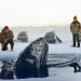 Image for Big Miracle