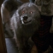 Image for Pet Sematary