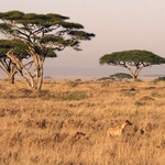 "Image for the Nature programme ""Serengeti"""