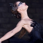 "Image for the Film programme ""Black Swan"""