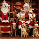"Image for the Film programme ""Santa Buddies"""