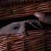 Image for Basket Case