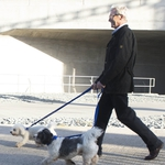 "Image for the Documentary programme ""Paul O'Grady: For The Love of Dogs"""