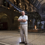 "Image for the Nature programme ""David Attenborough's Natural History History Museum Alive"""