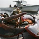 "Image for the Documentary programme ""Lobstermen: Jeopardy at Sea"""