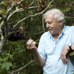 "Image for the Documentary programme ""Attenborough's Ark"""