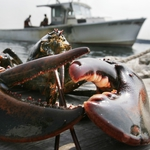 "Image for the Documentary programme ""Lobstermen"""