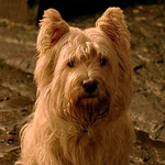 "Image for the Film programme ""Greyfriars Bobby"""