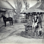"Image for the Film programme ""Black Beauty"""