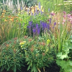 "Image for the Gardening programme ""RHS Hampton Court Palace Flower Show"""