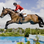 "Image for the Sport programme ""Royal International Horse Show"""