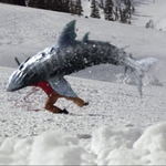 "Image for the Film programme ""Avalanche Sharks"""