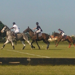 "Image for the Sport programme ""Norfolk Polo Festival"""