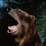 "Image for the Film programme ""Grizzly"""