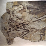 "Image for the Scientific Documentary programme ""The Four-Winged Dinosaur"""