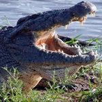 "Image for the Documentary programme ""Crocodile Ganglands"""