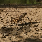 "Image for the Film programme ""Camel Spiders"""