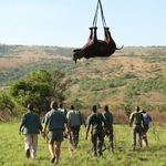 "Image for the Documentary programme ""Flight of the Rhino"""
