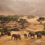 "Image for the Nature programme ""Secrets of the Desert Elephants"""