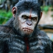 Image for Dawn of the Planet of the Apes