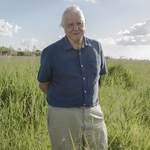 "Image for the Nature programme ""David Attenborough's Conquest of the Skies"""