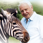 "Image for the Nature programme ""Attenborough's Natural Curiosities"""
