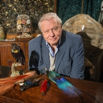 "Image for the Nature programme ""Attenborough's Paradise Birds"""