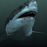 "Image for the Drama programme ""Megalodon: The Monster Shark Lives"""