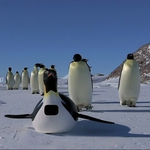 "Image for the Documentary programme ""Penguins: Spy in the Huddle"""
