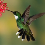 "Image for the Nature programme ""Hummingbirds"""