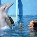 Image for Dolphin Tale 2